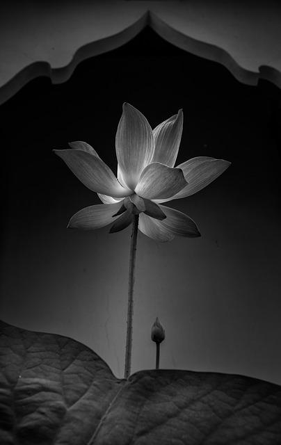 flower-1684455_640
